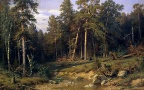 Обои пейзаж, природа, Иван Шишкин, Мачтовый Лес в Вятской Губернии, Сосновый Бор, картина