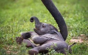 Картинка слон, Baby Elephant, слонёнок, Zambia, African Wildlife