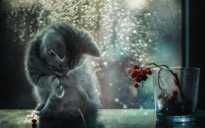 Картинка кот, свет, блики, окно, котёнок, боке