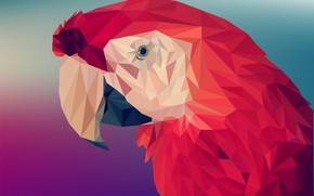 Картинка красный, треугольники, попугай