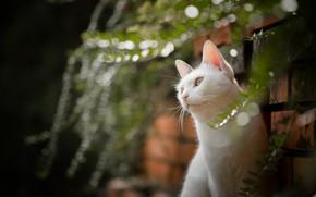 Картинка кошка, портрет, боке, белая кошка