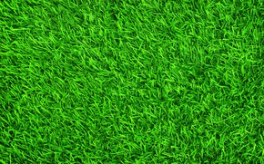 Обои трава, фон, газон, green, summer, grass, зеленая