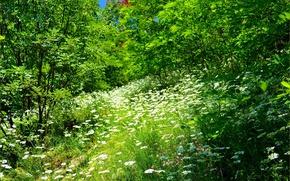 Картинка трава, Цветочки, Grass, Flowers