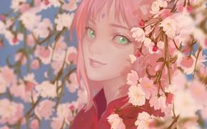 Картинка девушка, улыбка, Naruto, cherry blossom, Haruno Sakura, by 半透明体