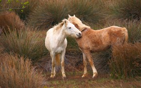 Картинка трава, кони, лошади, пара, два коня
