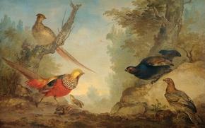 Обои Фазаны, Арт Шуман, птицы, масло, картина, холст, животные