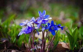 Картинка цветы, весна, flowers