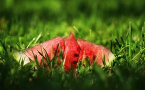 Картинка зелень, лето, арбуз, травка