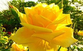 Картинка солнце, роза, крым, феодосия