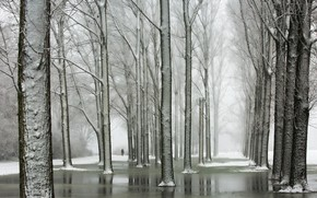 Картинка зима, деревья, парк