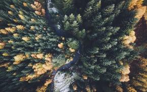 Обои природа, лес, осень, вид сверху, деревья