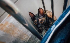 Картинка котейка, взгляд, глаза