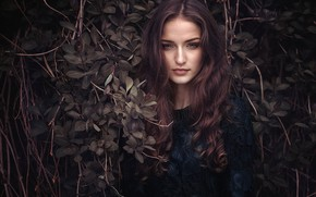 Картинка взгляд, листья, девушка, ветки, лицо, портрет, длинные волосы, локоны