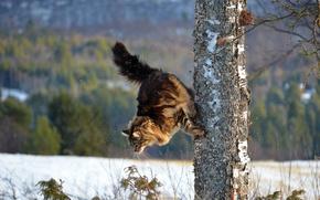 Обои зима, кошка, кот, дерево, паркур