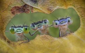 Картинка насекомые, лист, Friends forever