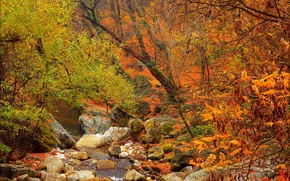 Картинка лес, ручей, камни, Осень, Fall, Autumn, Colors, Forest, Trees