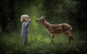 Картинка природа, ребенок, мальчик, олень, милый, друзья