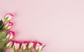 Картинка фон, Цветы, Розы, бутоны