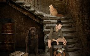 Картинка девушка, дом, пистолет, креатив, стены, черный, коты, деньги, собака, кирпич, рыжий, лестница, ступени, сумка, ящик, …