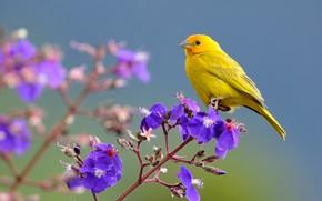 Картинка цветы, птица, ветка, Шафрановый вьюрок