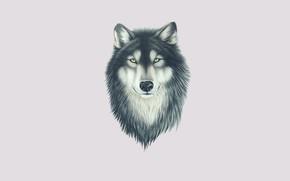 Картинка взгляд, морда, волк