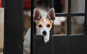 Обои дверь, взгляд, собака