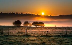 Картинка поле, природа, туман