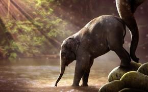 Картинка forest, river, animals, nature, water, savanna, savannah, trunk, wildlife, Elephant, sun rays, son, mother, baby …
