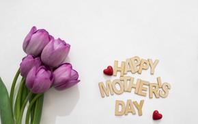 Картинка цветы, букет, весна, тюльпаны, fresh, flowers, tulips, spring, purple, mother's Day