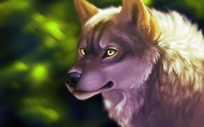 Картинка волк, зеленые глаза, by ClimbToTheStars
