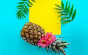 Картинка листья, цветы, фон, кокос, ананас