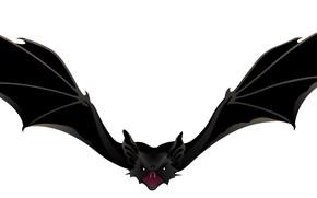 Картинка фон, крылья, летучая мышь