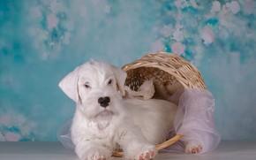 Картинка корзина, собака, щенок, ткань