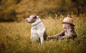 Обои поле, лето, природа, детство, настроение, собака, шляпа, мальчик, деревня, колосья, сидит, былое, деревенский