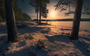 Картинка лес, снег, Норвегия, Norway, Ringerike