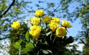 Картинка цветы, розы, букет, желтые