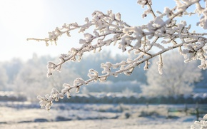 Обои зима, снег, ветки, иней