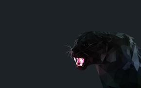 Обои черный, Минимализм, клыки, Черная пантера