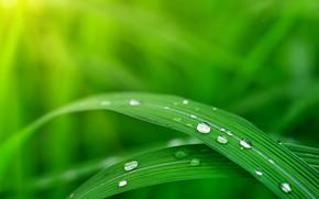 Картинка трава, роса, блюр