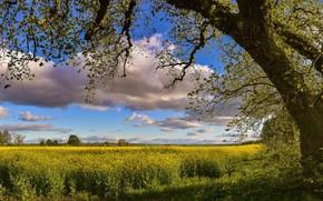 Картинка поле, небо, природа, дерево, весна