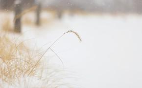 Картинка зима, трава, снег, природа, туман