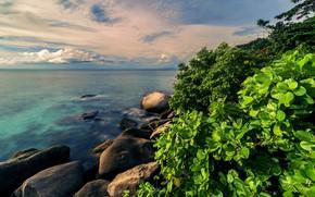 Картинка море, зелень, вода, природа, тропики, камни, куст