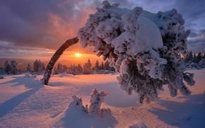 Обои зима, снег, закат, дерево, Германия, мороз, Germany, Баден-Вюртемберг, Black Forest, Шварцвальд, Baden-Wurttemberg
