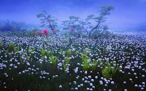 Обои трава, роса, дымка, Япония, туман, природа, утро, цветы