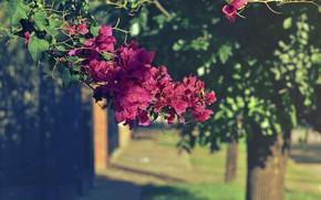 Картинка природа, фон, цветение