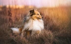 Обои собака, природа, осень, друг