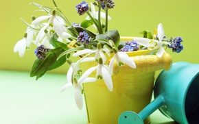 Картинка цветы, весна, подснежники, ведро, лейка