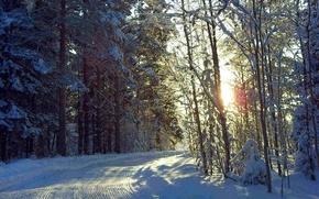 Картинка зима, дорога, лес, солнце, снег