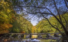 Картинка осень, лес, деревья, река, Англия, мостки, England, Сомерсет, Somerset, Exmoor National Park, Национальный парк Эксмур, …