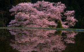 Картинка весна, дервья, цветы весна, Comyu Matsuoka